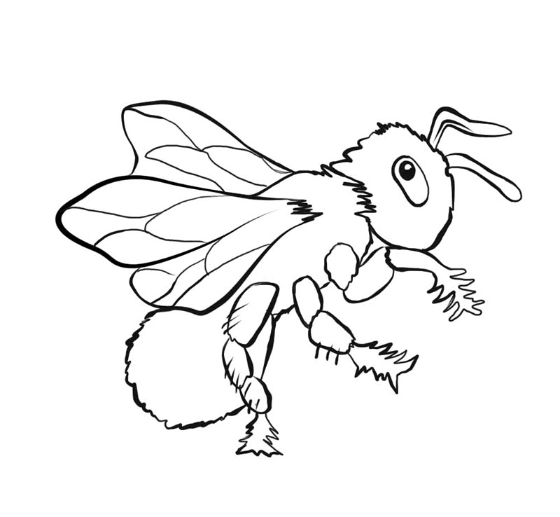 800x738 Free Printable Bee Coloring Pages For Kids