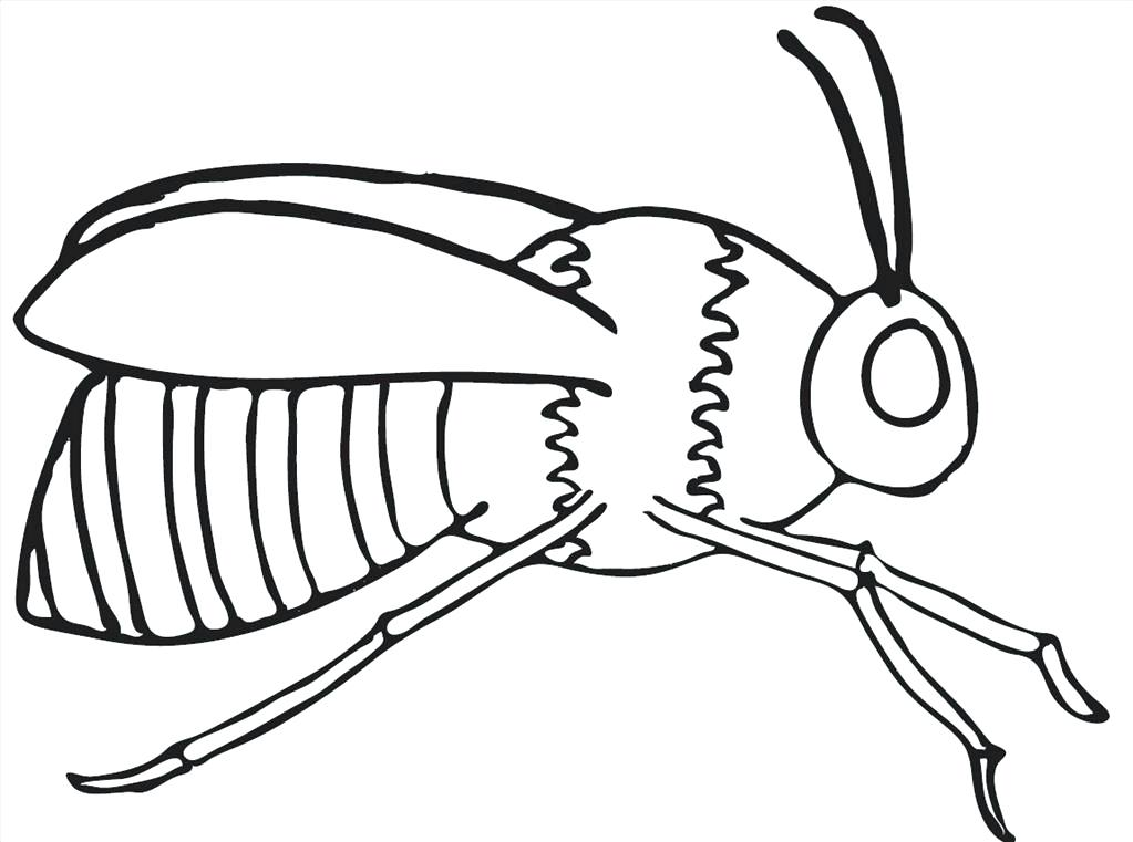 1023x761 Great Bee Coloring Pages Photo Unknown Resolutions High Great Bee