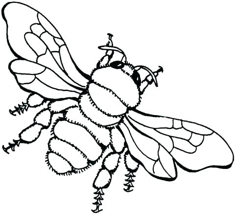 480x437 Honey Bee Coloring Page Awesome Honey Bee Coloring Page Image