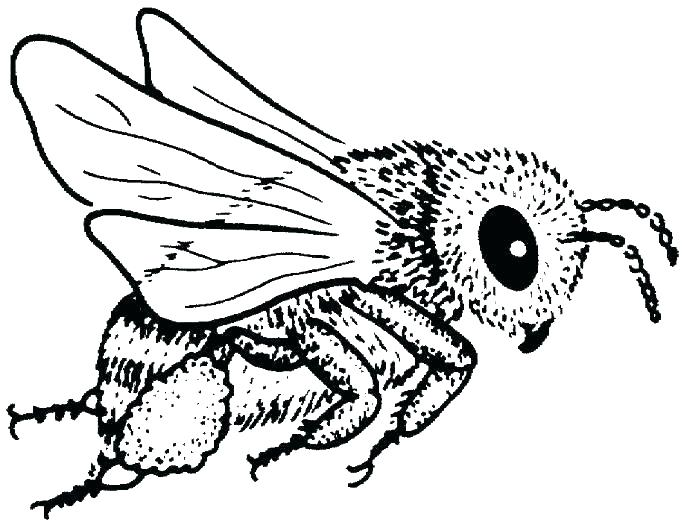 684x525 Honey Bee Coloring Pages
