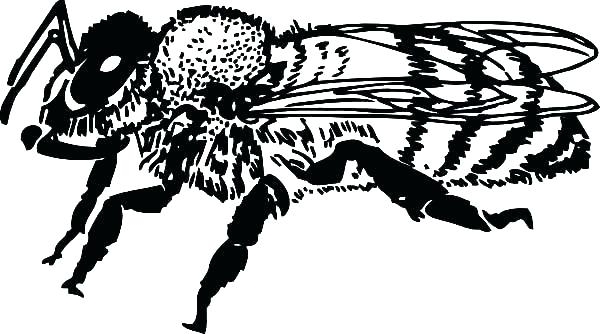 600x334 Honey Bee Coloring Pages Bee Pictures To Color Cartoon Honey Bee