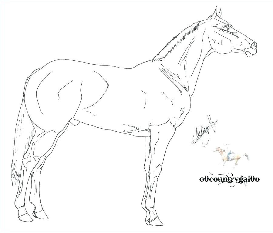 900x768 Coloring Page Of A Horse