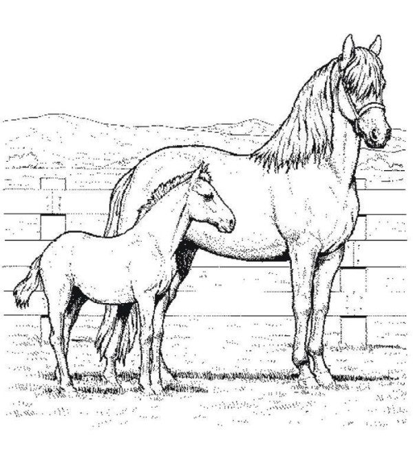 600x681 Coloring Page Of Mom And Baby Horse