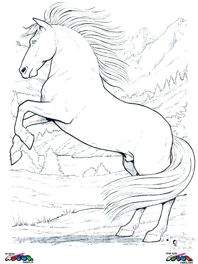 645x860 Coloring Pages For Horses Coloring Horse Baby Horse Coloring Pages