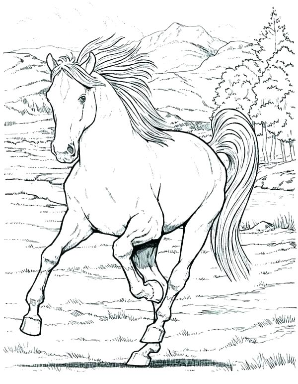 600x771 Horse Coloring Pages To Print For Free Coloring Horse Pages