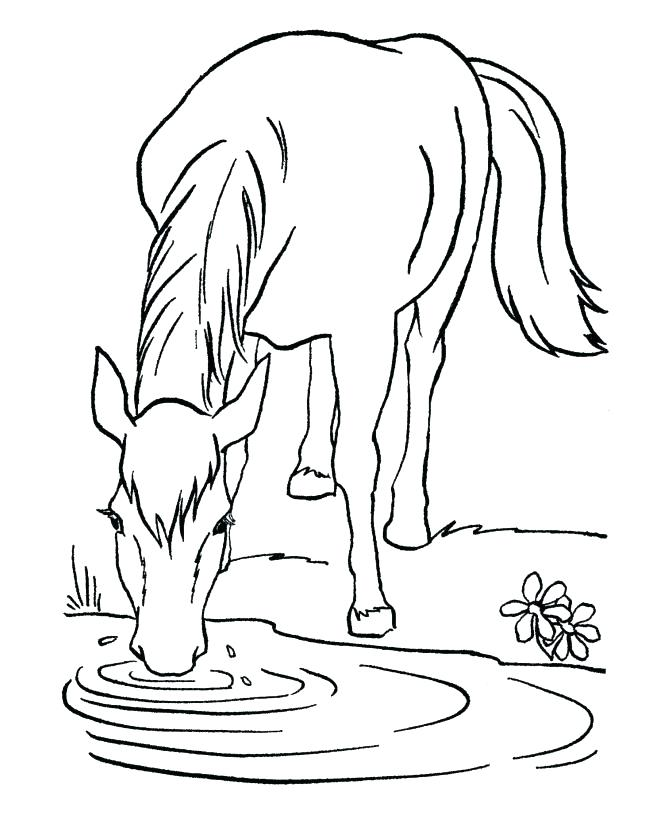 670x820 Free Printable Coloring Pages Of Realistic Horses Kids Coloring