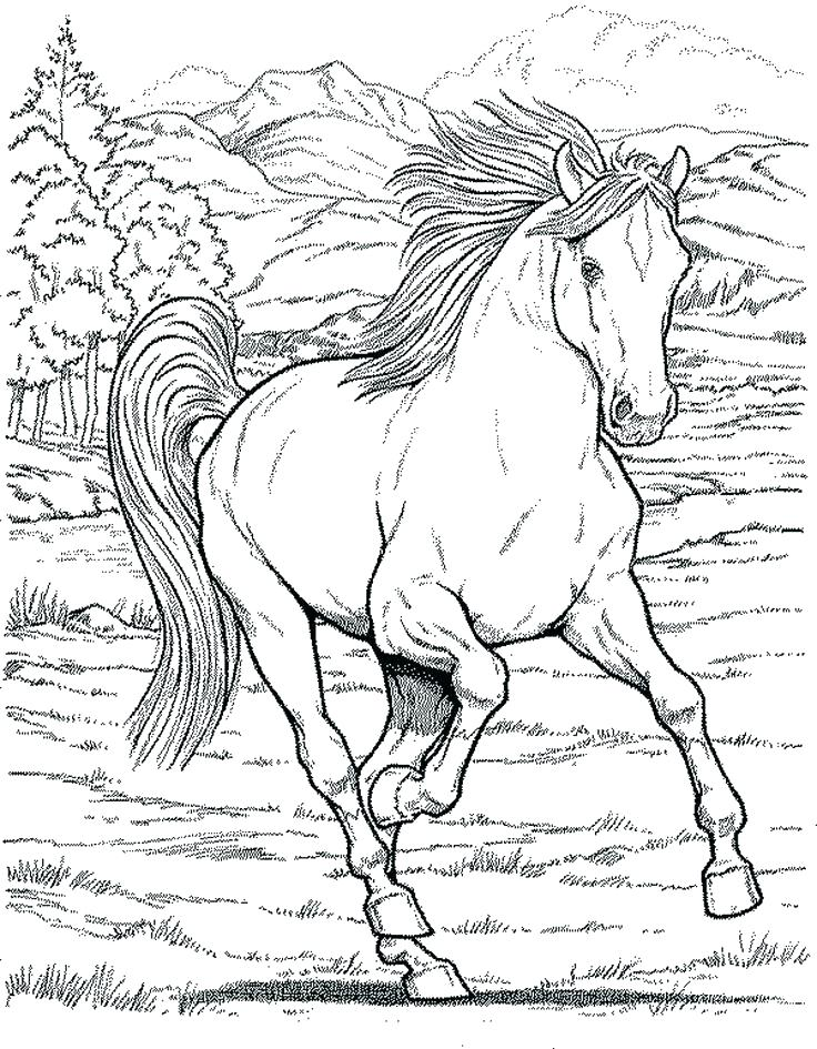 736x945 Coloring Pages Horse
