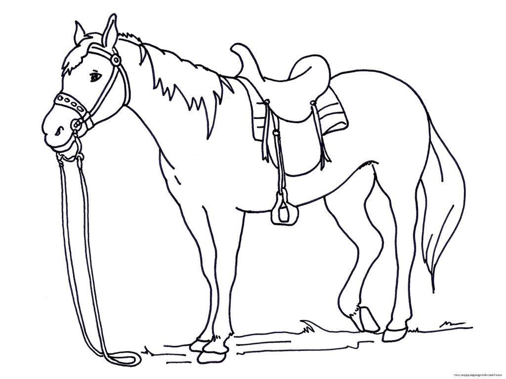 1024x768 Horses Coloring Pages Horse Trendy Inspirational For Unknown Free