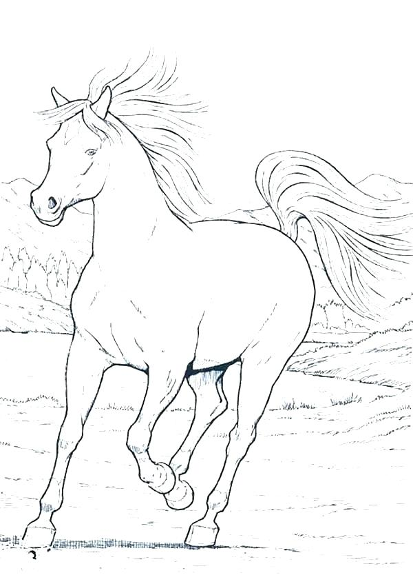 600x847 Free Horse Coloring Pages And Horse Head Coloring Page Realistic