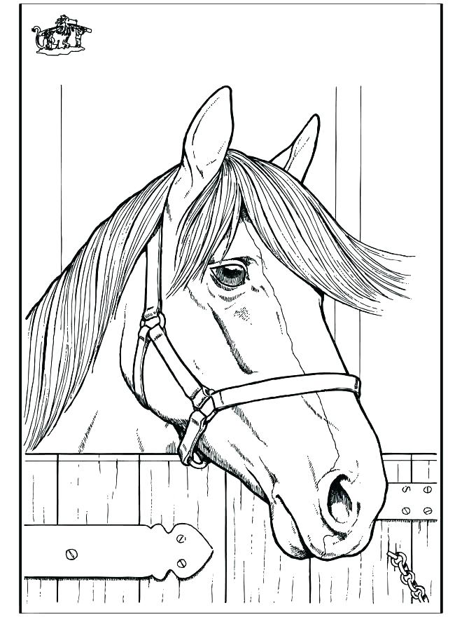 660x880 Horse Head Coloring Page Head Coloring Page Elf Realistic Horse