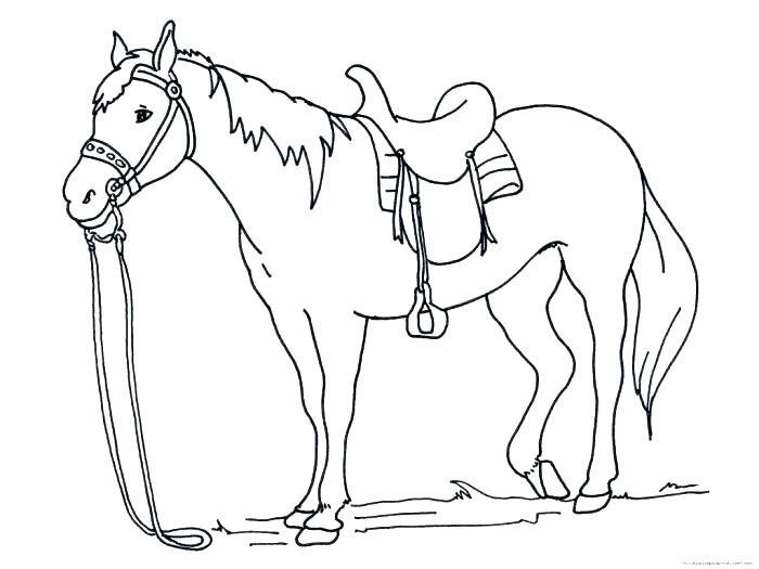 700x525 Horse Head Coloring Page This Is Coloring Pages Horses Images