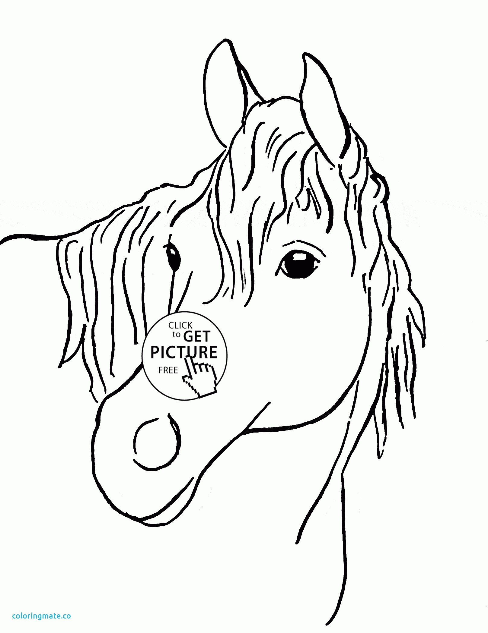 1617x2100 Coloring Pages Horse Head Book Page Sheets Printable Profile