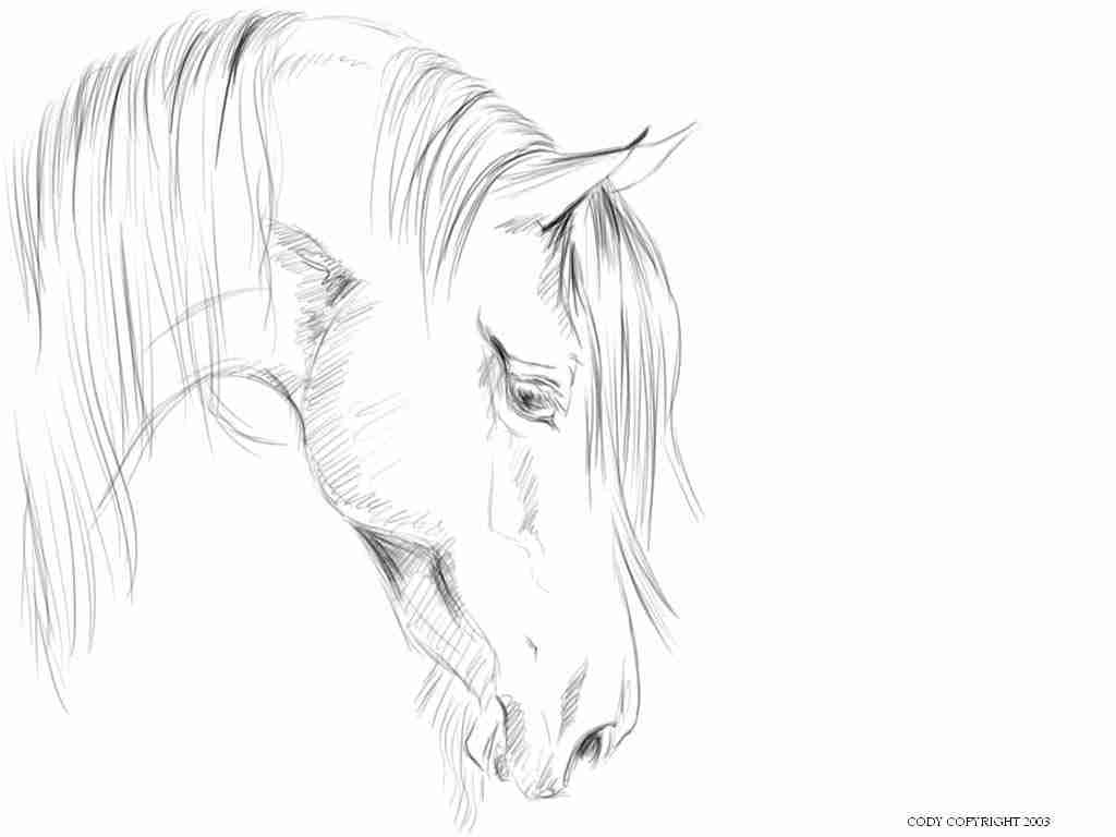 1024x768 Realistic Horse Head Coloring Pages Olegratiy