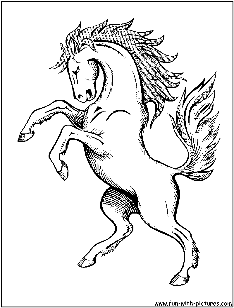 800x1050 Wild Horses Coloring Pages
