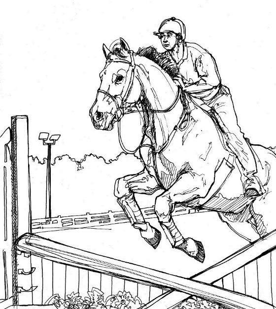 560x627 Horses Jumping Coloring Pages Color Horses Competition