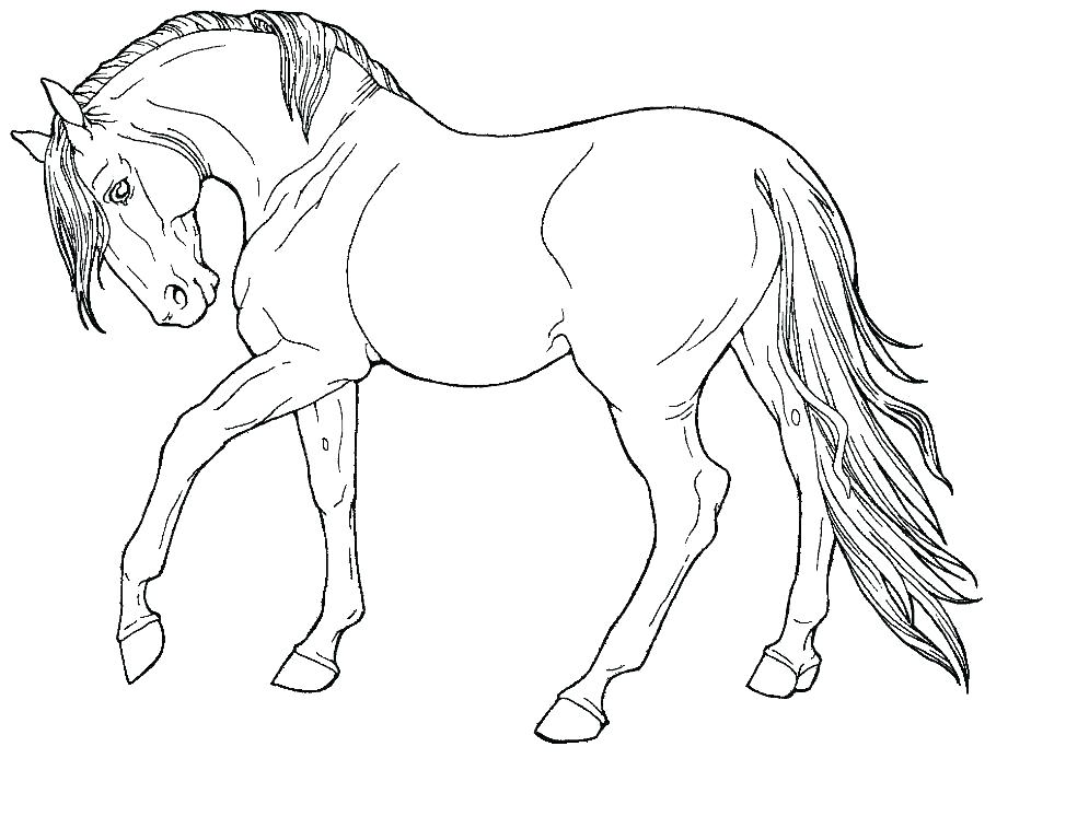 995x768 Coloring Pages Horse