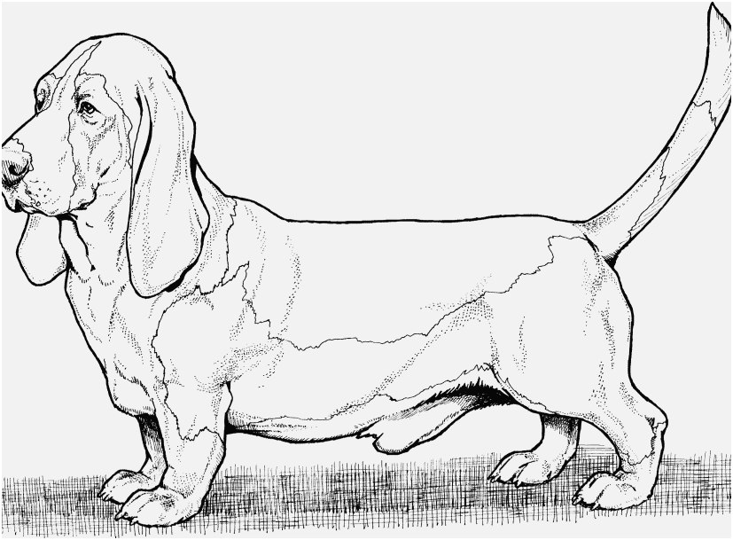 827x609 The Best Concept Coloring Pages Of Dogs Delightful