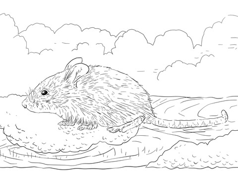 480x360 House Mouse Coloring Pages Common House Mouse Coloring Page Free