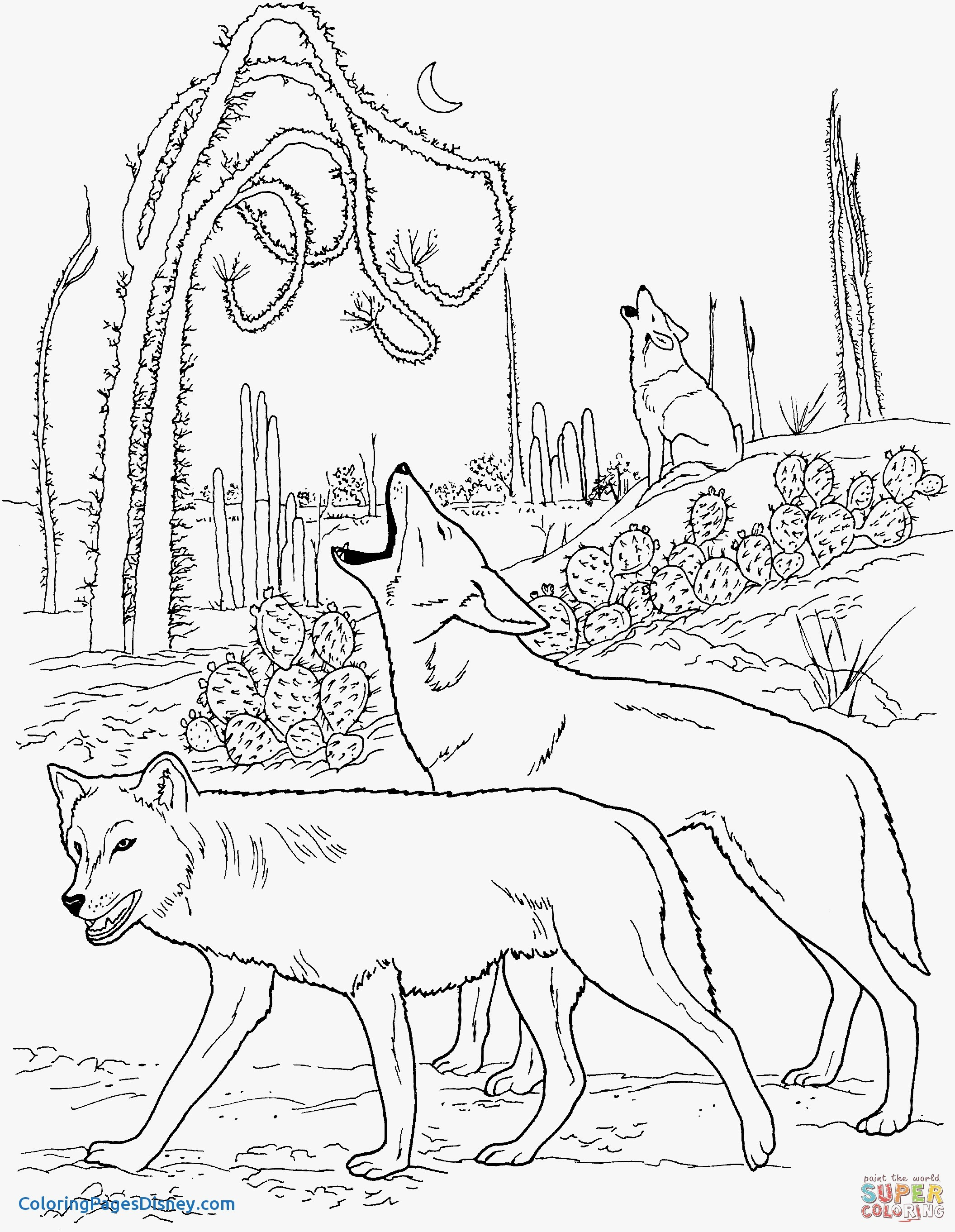 2111x2722 Coyote Coloring Pages Inspirational Coyotes Howling In Desert