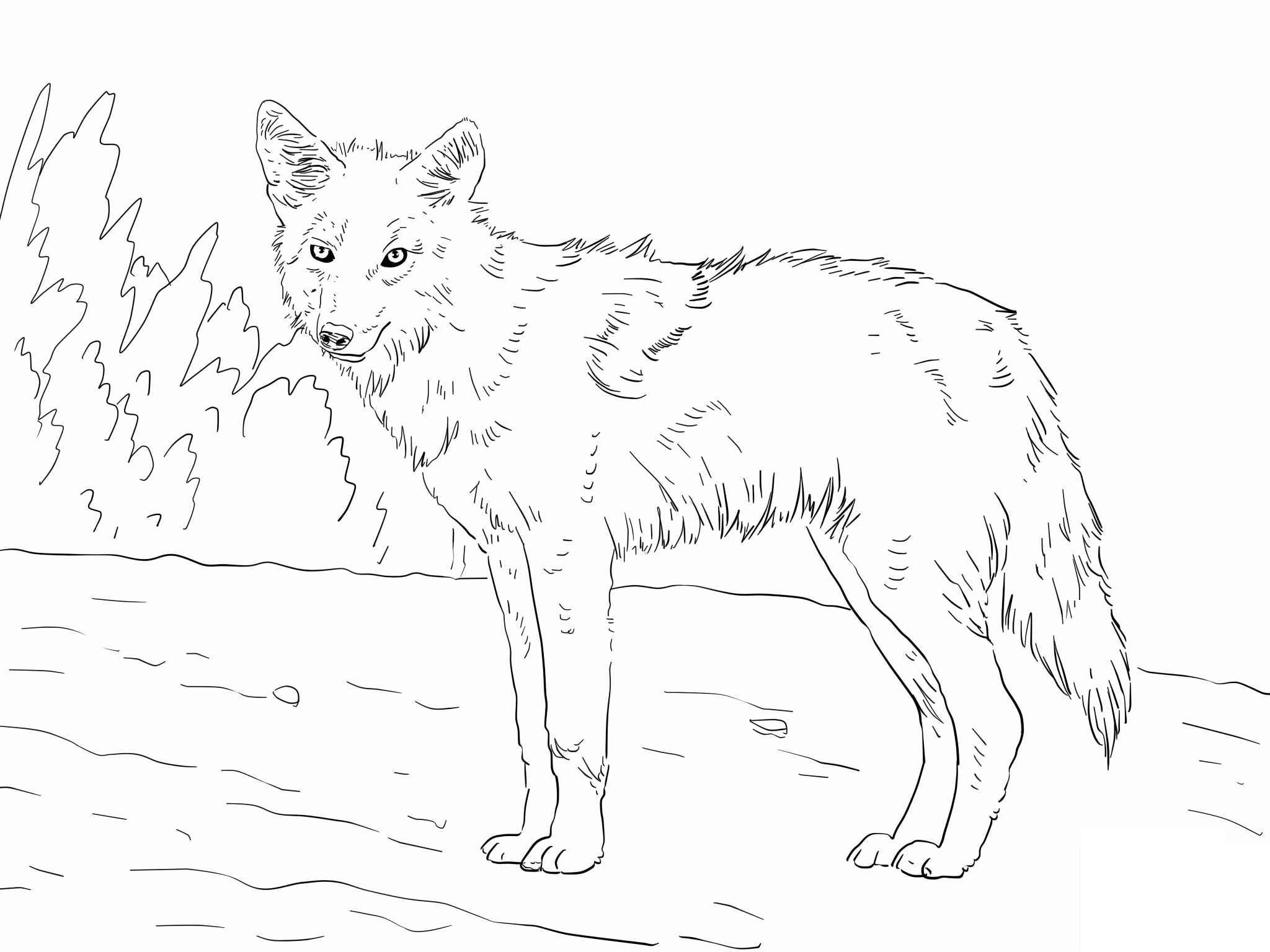 2048x1536 Coyote Printables Download Free Coloring Sheets