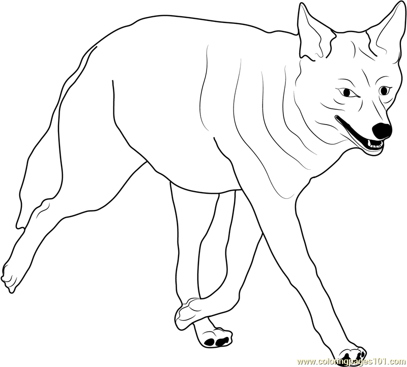 800x722 Coyote Walking Coloring Page