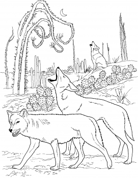 271x350 Coyotes Howling In Desert Coloring Pages Grade Science