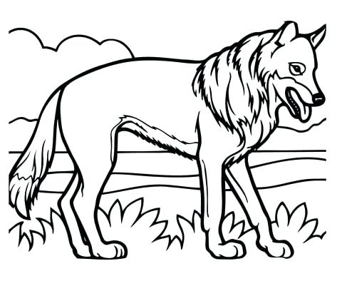 480x394 Coyote Coloring Page Click To See Printable Version Of Realistic