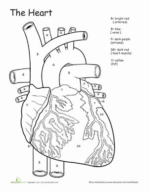 graphic regarding Free Printable Human Anatomy Coloring Pages identified as Human Anatomy Coloring Internet pages at  No cost for