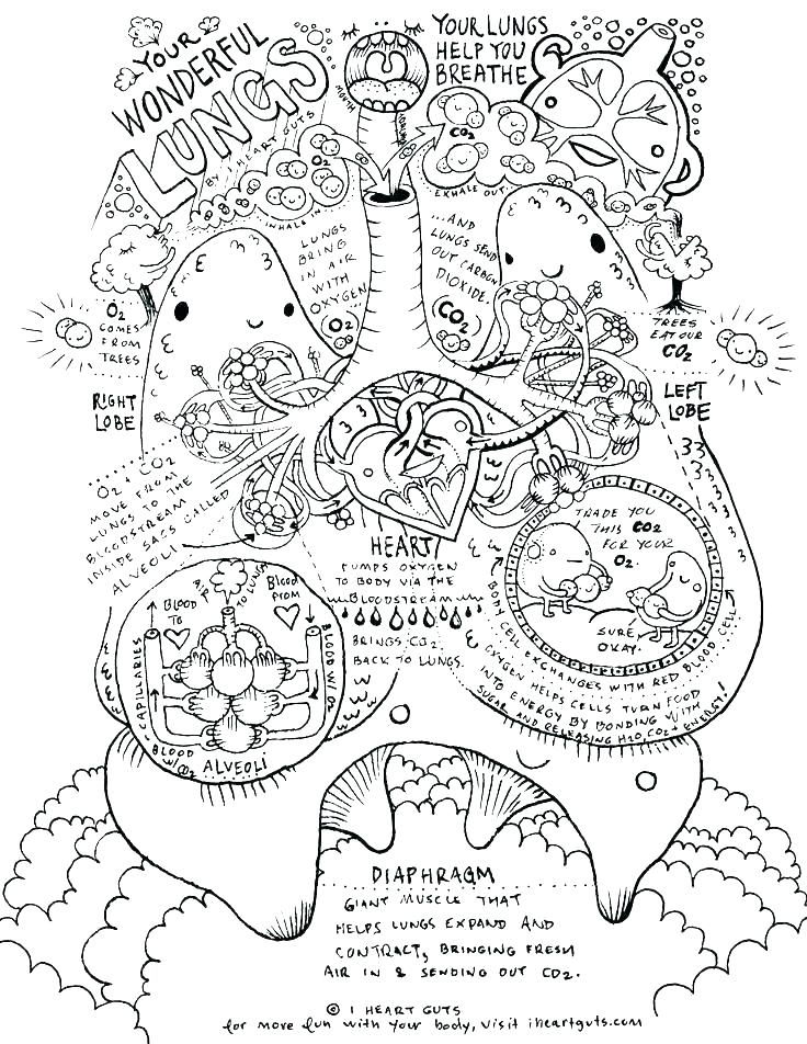 736x952 Human Anatomy Coloring Pages Anatomy Coloring Pages Brain Anatomy