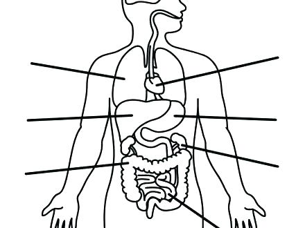 440x330 Human Body Coloring Pages