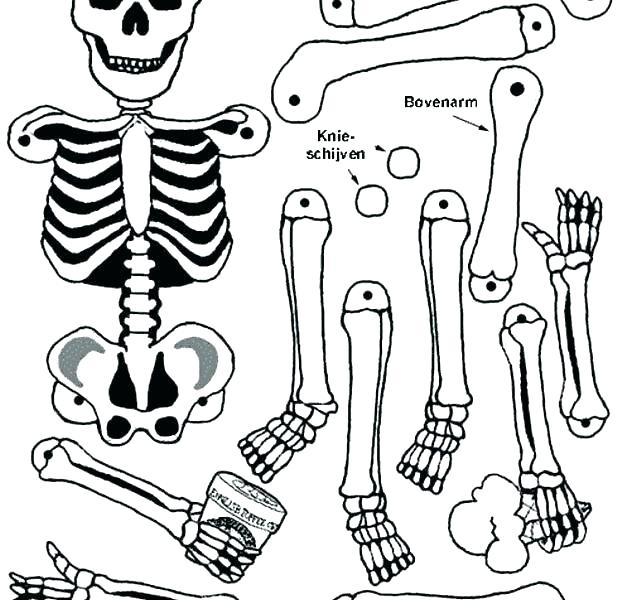 618x600 Body Coloring Pages Human Coloring Pages Human Body Coloring Pages