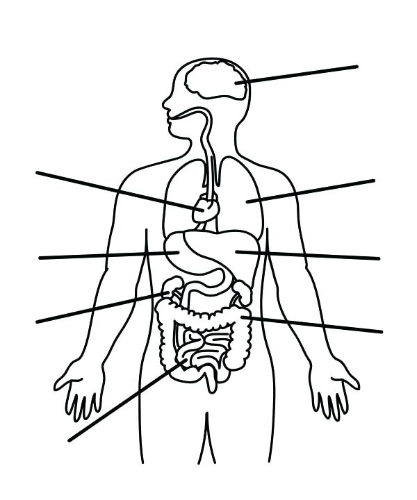 600x720 Human Anatomy Coloring Pages Human Anatomy Organs Coloring Pages