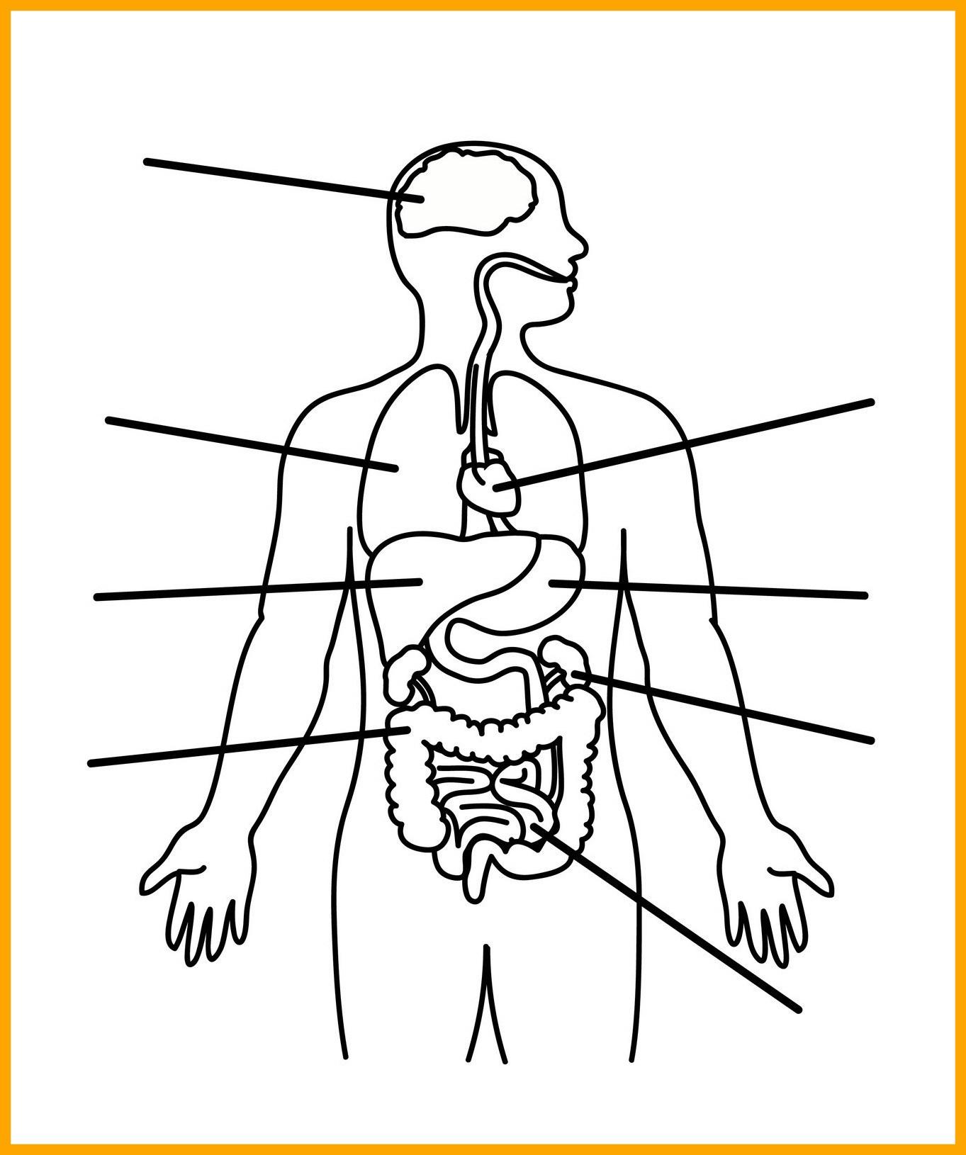 1363x1630 Shocking Human Body Anatomy Outline Printable For Kids Montessori
