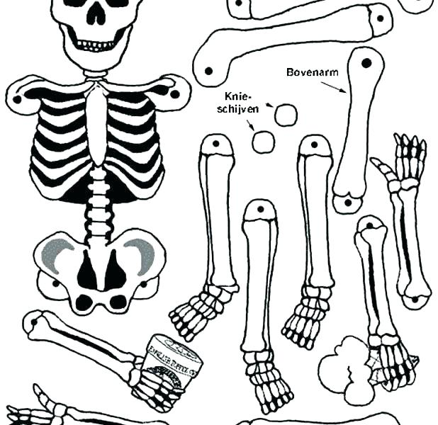618x600 Skeleton Coloring Page Skeleton Coloring Pages Printable Skeleton