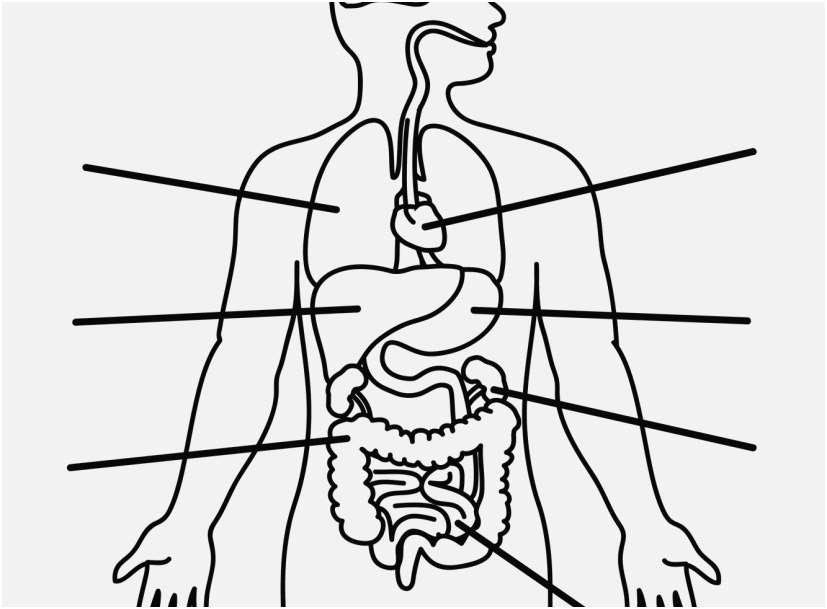 827x609 The Superior Gallery Skeletal System Coloring Pages Very Popular