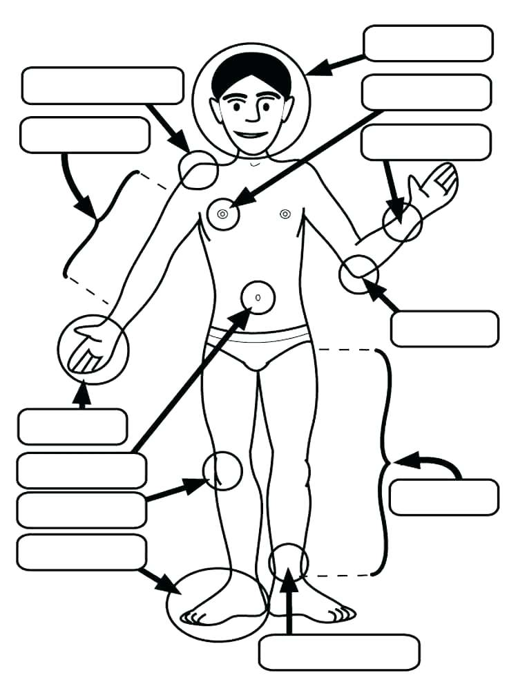 750x1000 Human Body Coloring Pages Human Body Coloring Page Human Body