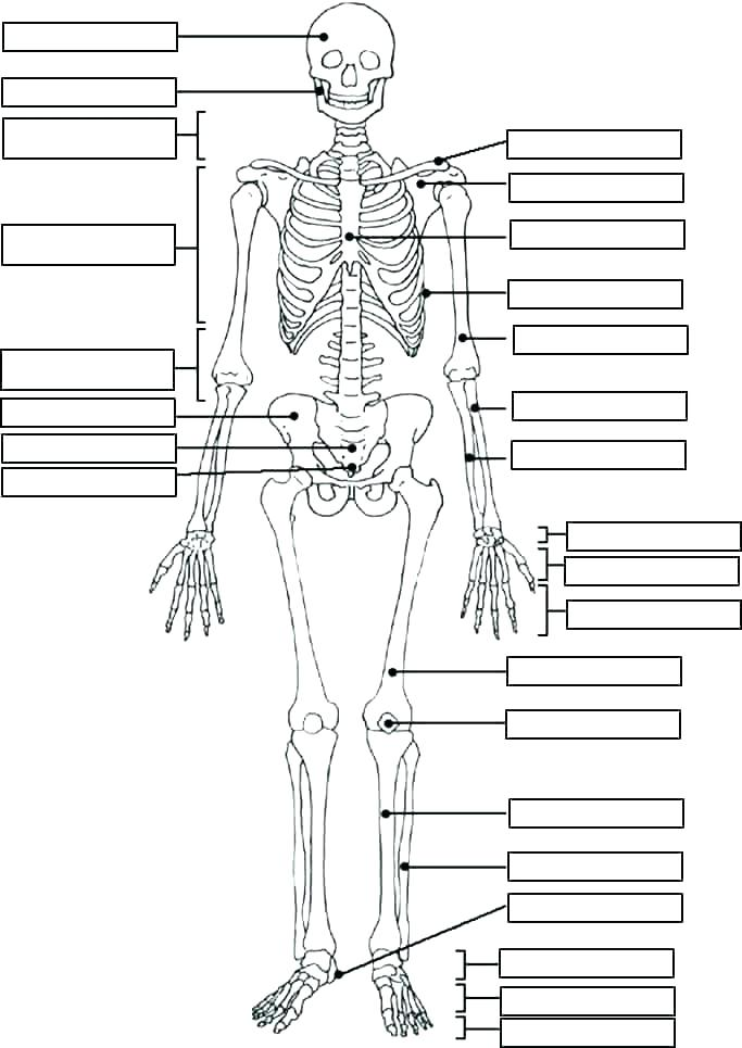 683x965 Skeleton Coloring Sheet Coloring Pages Skeleton Coloring Page Free