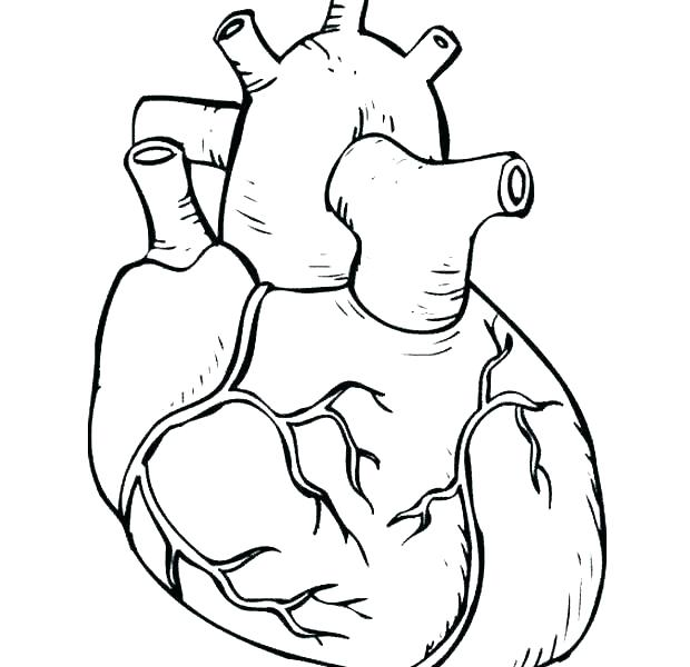 620x600 Human Body Coloring Page Human Body Coloring Pages Human Anatomy