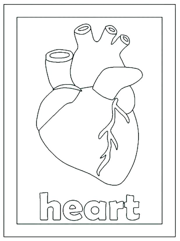 618x824 Human Heart Coloring Page Human Heart Coloring Page Human Coloring