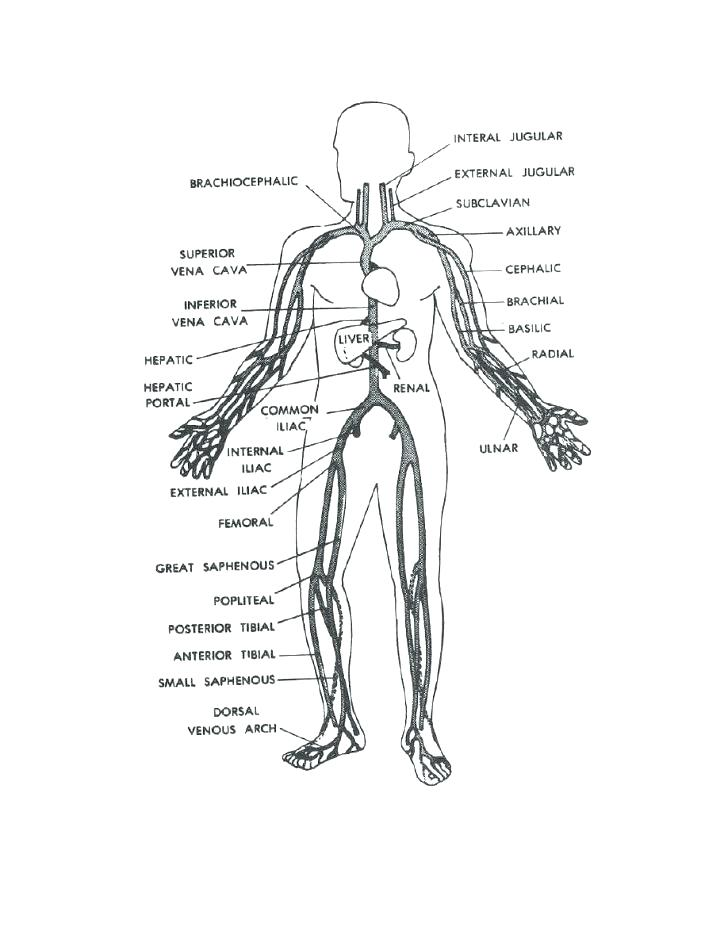 728x942 Human Body Anatomy Coloring Pages Icontent