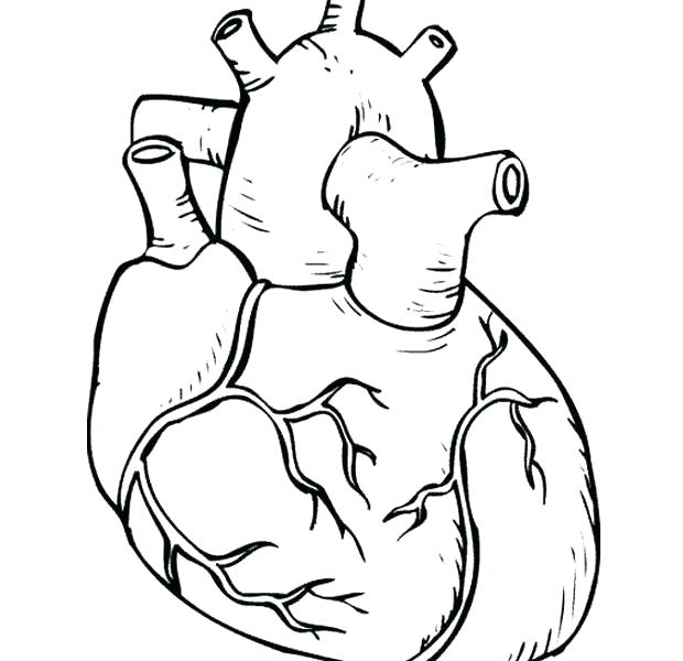 Human Body Parts Coloring Pages At Getdrawingscom Free For