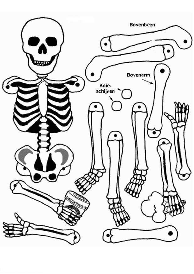 618x874 Human Body Systems Coloring Pages