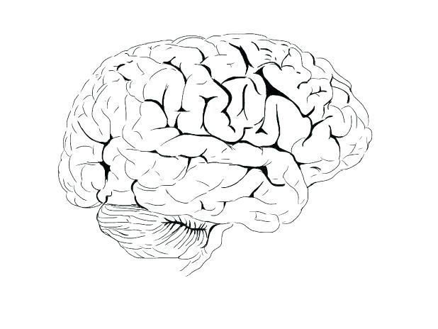 618x464 Brain Coloring Page Brain Coloring Page Images Parts Of The Brain