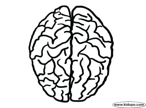470x350 Brain Coloring Page The Human Brain Coloring Book And Human