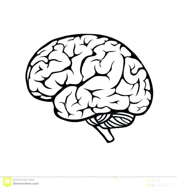 618x661 Brain Coloring Pages Brain Anatomy Coloring Pages Brain Coloring