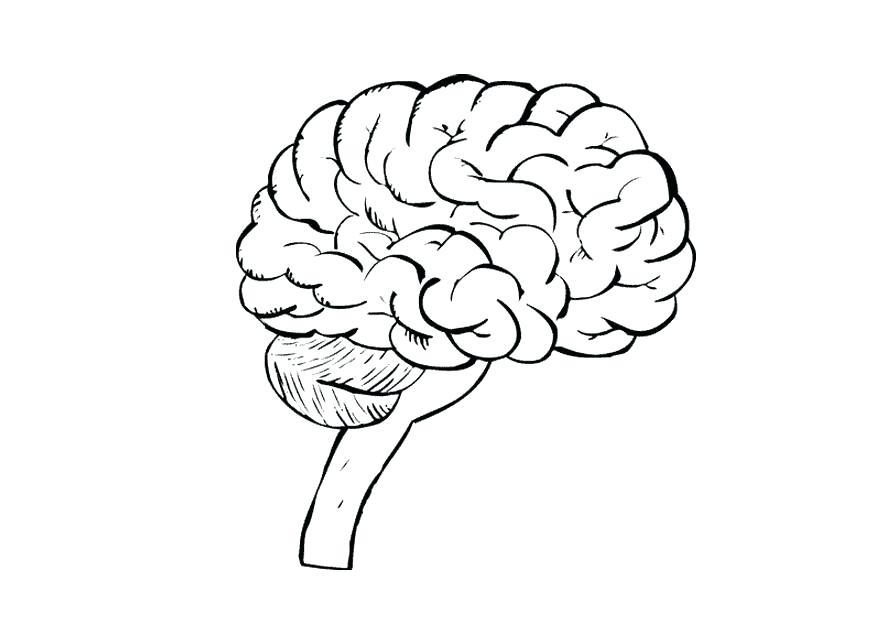 875x620 Human Brain Coloring Worksheet Answers Coloring Page Brain Img