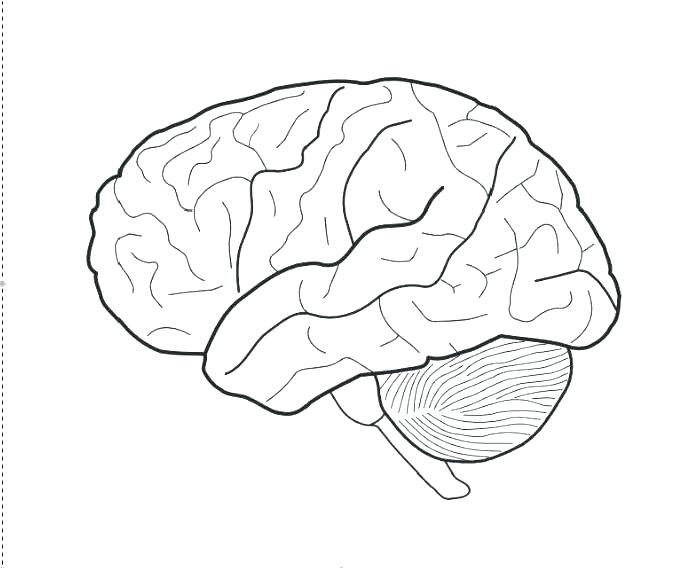 678x568 Brain Anatomy Coloring Pages Human Brain Coloring Book As Well As