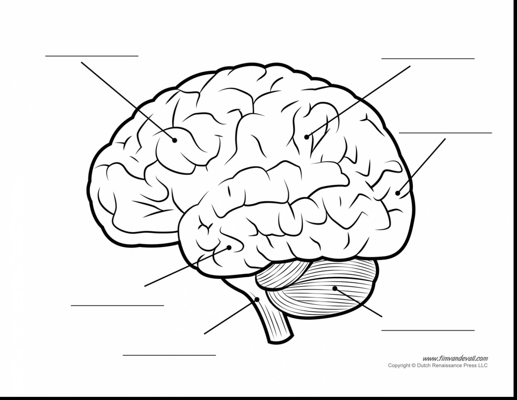 1650x1277 Unbelievable Human Brain Diagram Blank With Coloring Page