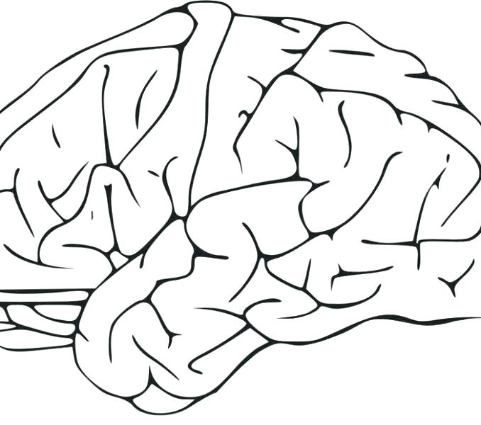 678x600 Human Brain Coloring Book