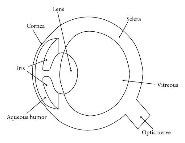 Human Eye Coloring Page At Getdrawings Com
